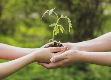 Proyecto Eco - Bosco